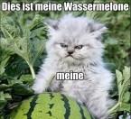 Dies ist meine wassermelone, meine