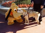 Pluto and service dog