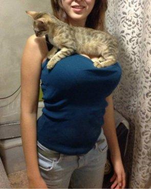 cat rest