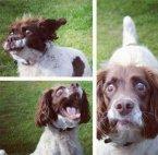 crazy dog face