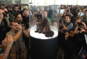 fancy cat is famous