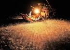 fishing at night