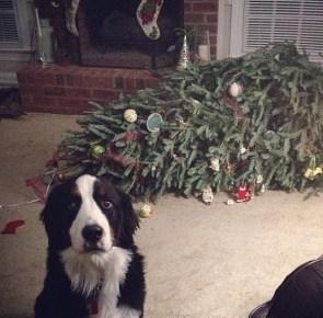 guilty dog vs xmas tree