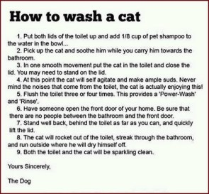 how to wash a cat