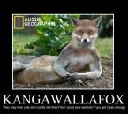 kangawallafox