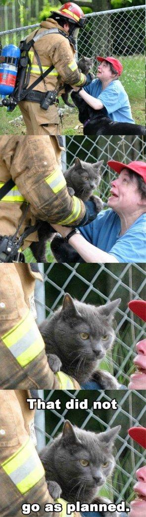 pyro kitty
