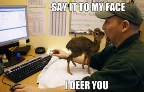say it to my face – I deer you