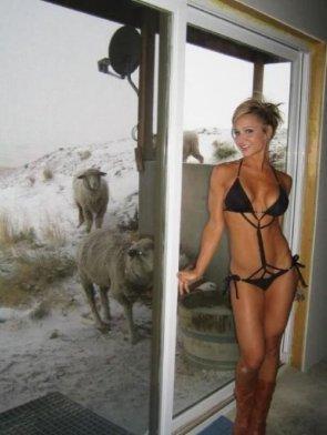 sexy sheep woman