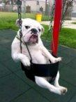 swing dog