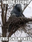 wait a second, this isnt my nest