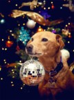 disco christmas dog