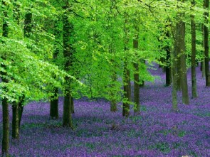 purple and green forest
