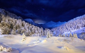 white trees