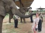 elefant hello