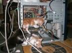 kitten computer techs