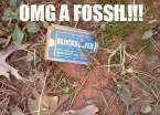 omg a fossil