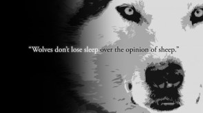 wolves dont lose sleep over the opinion of sheep