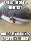 I need to see a dentist – one of my canines is getting loose