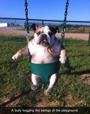 bully hoggin the swings