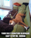 silly furniture blockade
