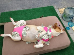 stripper dog