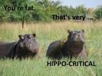 Hippo-critical