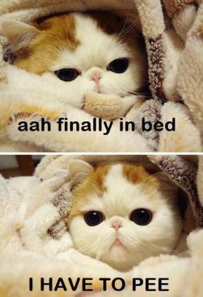 finally in bed – I HAVE TO PEE