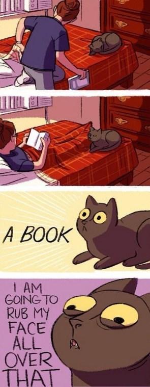 cat vs book