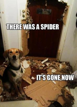 dog vs spider