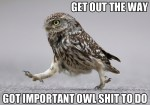 get out of the way – got important owl shit to do.jpg