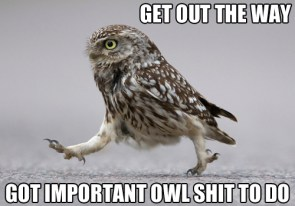 get out of the way – got important owl shit to do