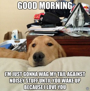 good morning – I'm just gonna way my tail against noisey stuff until you wake up