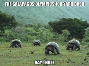 the galapagos olympics 100 yard dash – day three