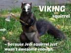 vikign squirrel