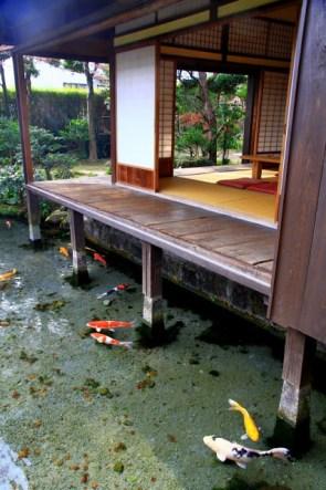 Koi Pond Deck