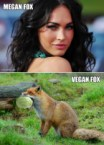 Megan Fox Vs vegan Fox