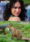 Megan Fox Vs vegan Fox