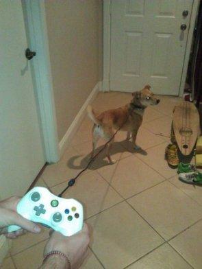 Pet Controller