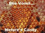 bee vomit – nature's candy
