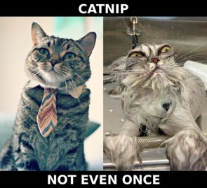 catnip – not even once