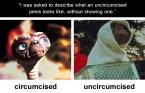 circumcised vs uncircumcised