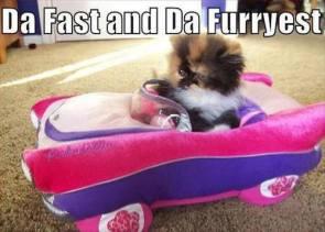 da fast and da furryest