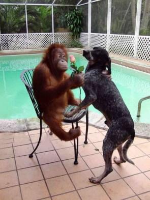 monkey loves dog