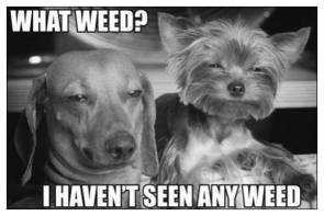 what weed