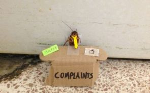 Bug Complaints