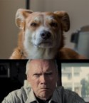 Clint Eastwood dog stare