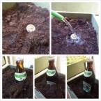 grow a beer