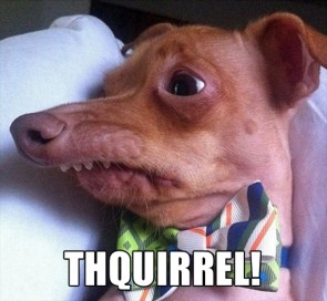 thquirrel