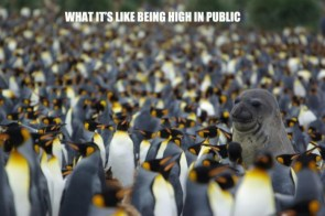 what it's like being high in public