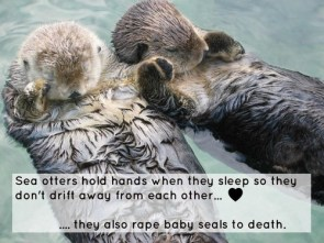 A date with otters